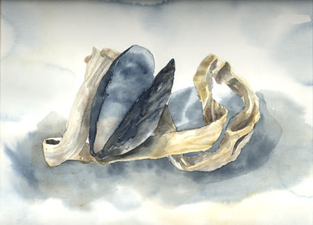 [Mussel shell, watercolour by Lucy Arnold]